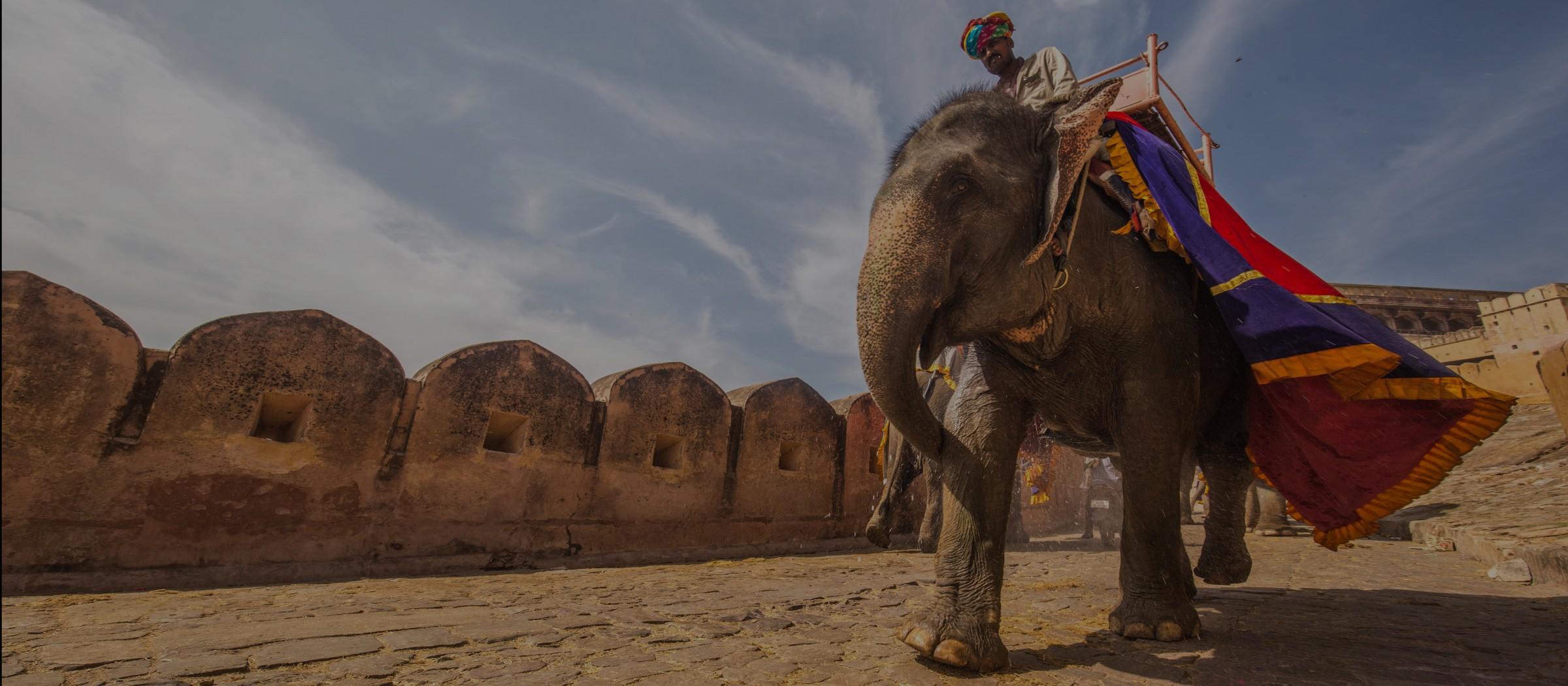 indian-elephant-rajasthan