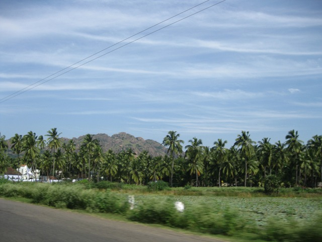 Palm-trees-south-india