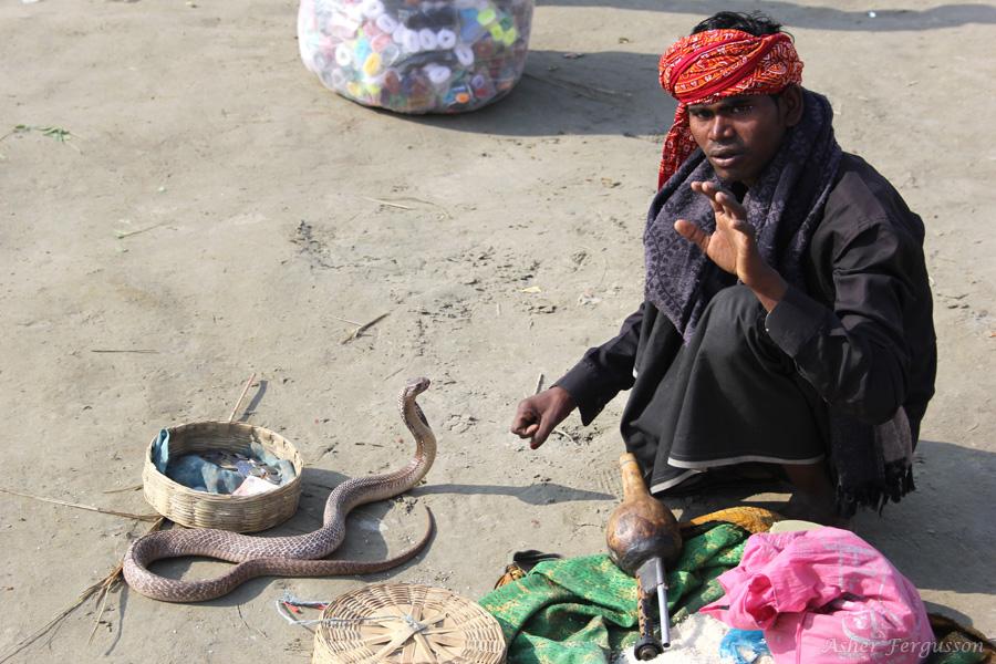 cobra charmer india