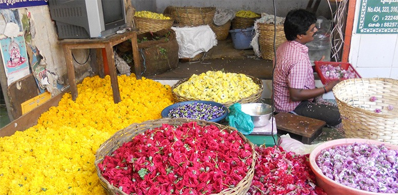 flowers-in-india