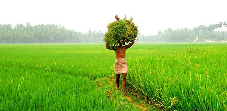 kerala-farmer