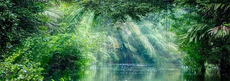 costa-rica-rainforest