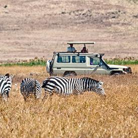 Where should I go on an African safari?