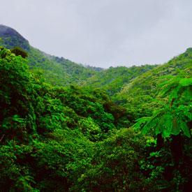 Rainforest-Puerto-Rico