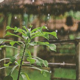 Rain-Tanzania