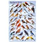Backyard Birds Poster