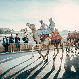 people on camels in egypt