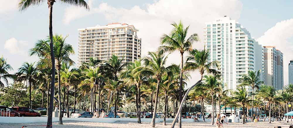 palm trees in city of Florida