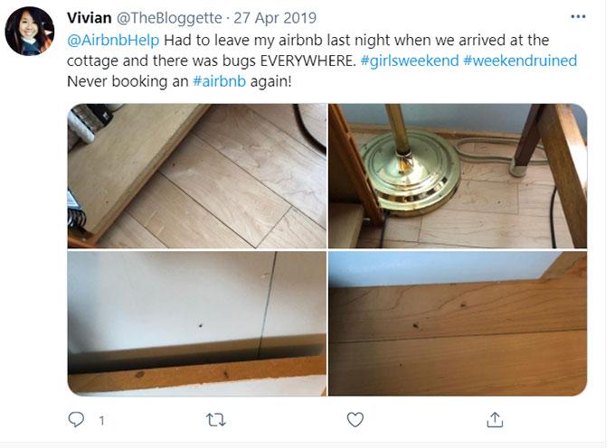 Airbnb Bugs, Bug Bites