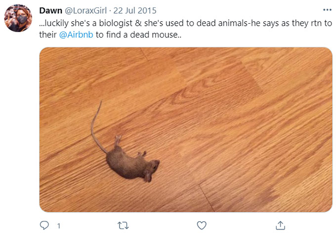 Airbnb Rats, Rodents